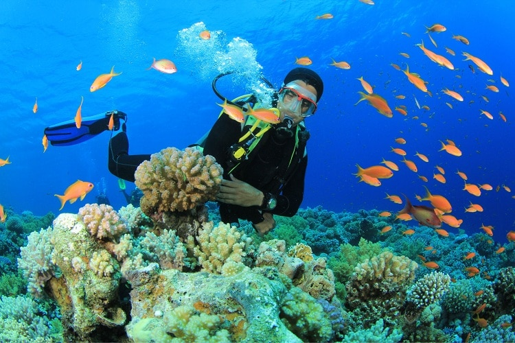 things to do in halong bay - scuba diving