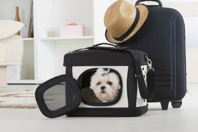 Traveling with pets and food products