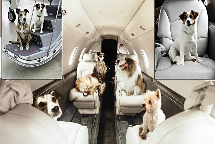 pet air transportation services - petjet.com