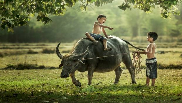 Why tourists enjoy riding a buffalo in Hoi An countryside