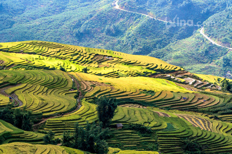 Rice filed of terraces