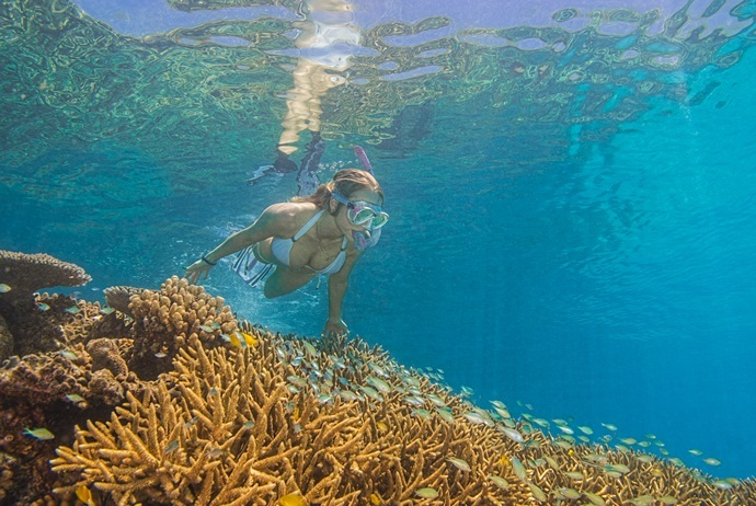 what are attractions in hon mun island - take a dive to see the coral