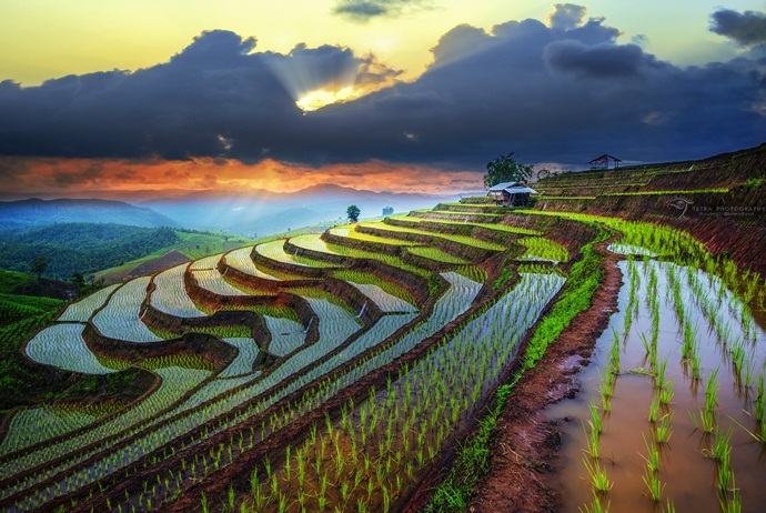 what are attractions in sin ho - terraced fields