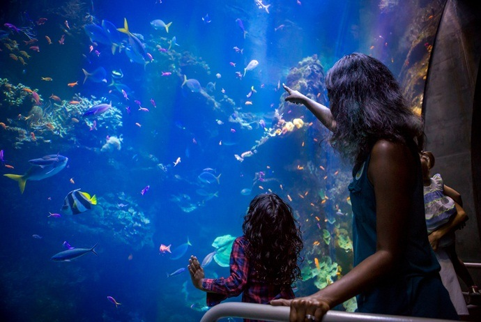 what to do in vinpearl land in nha trang - aquarium