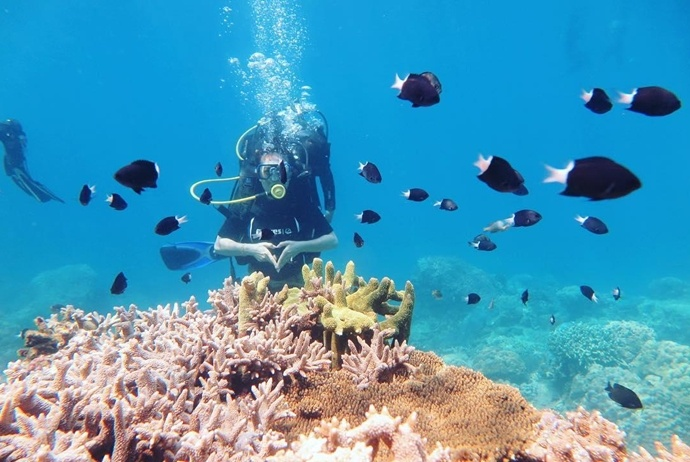 binh ba island - dive and see coral