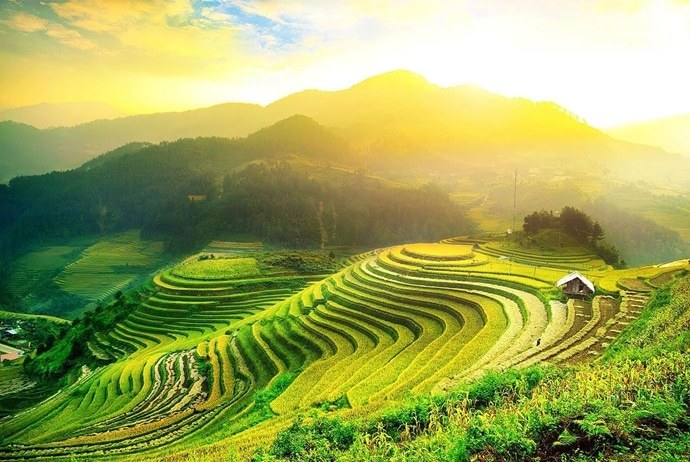 circuit triangle flower festival - hoang su phi terraced field