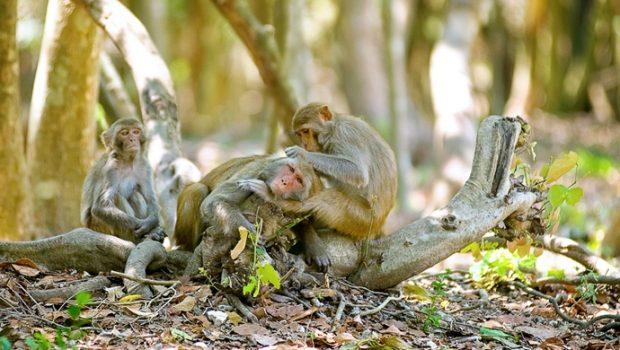 monkey island - senvangtravel