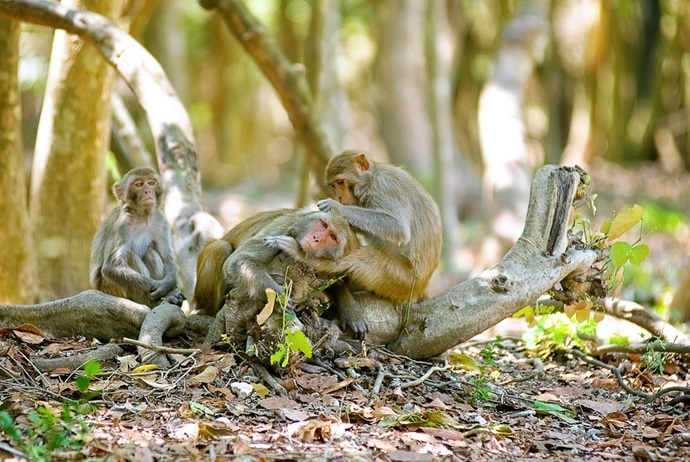 Monkey Island Nha Trang Tourism – Explore Hon Lao From A To Z