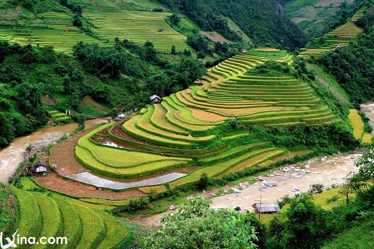vietnam photos - mu cang chai golden rice fields