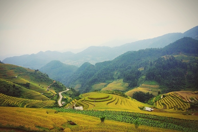 mu cang chai golden rice fields - mam xoi hill