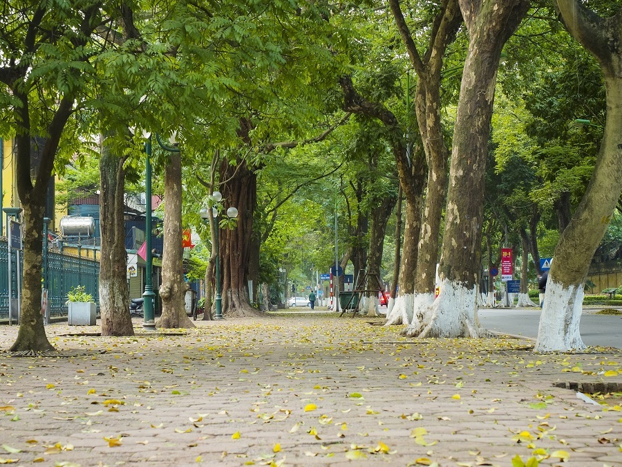 autumn in hanoi - the leaves begin to fall