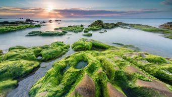 nam o reef danang, nam o reef vietnam