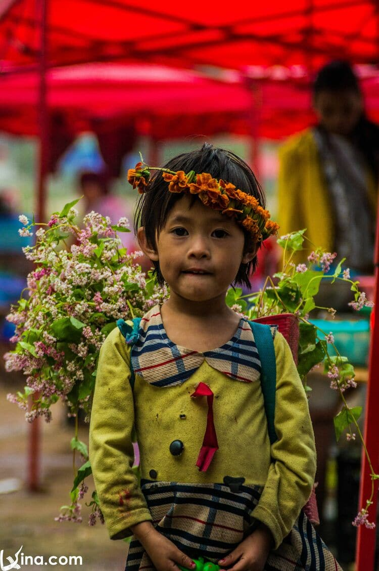 vietnam photos - buckwheat flower photos