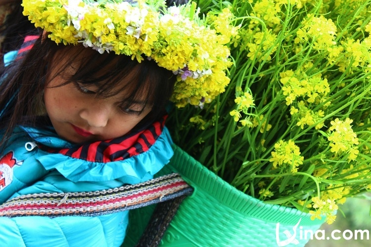 ha giang in spring photos