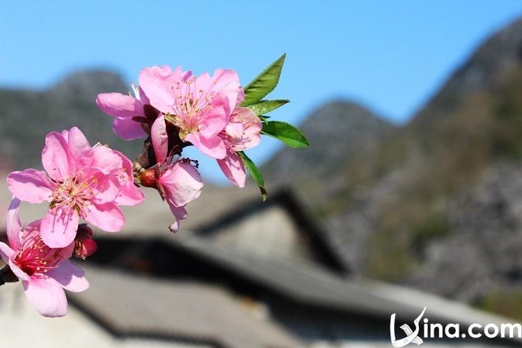 ha giang in spring photos - xuan