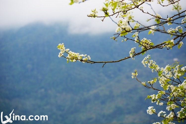 ha giang in spring travel - xuan