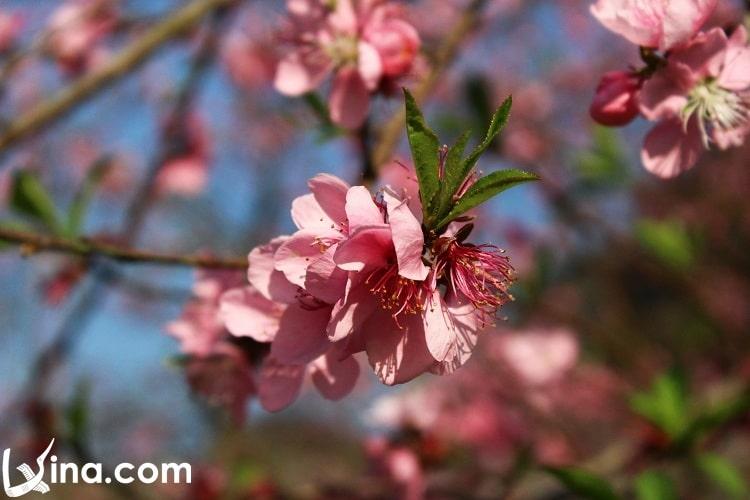 ha giang in spring - xuan