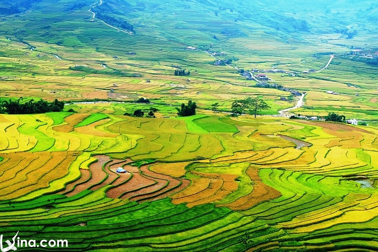 Yen Bai In September Photos: Landscapes & Cultural Activities In Vietnam Travel