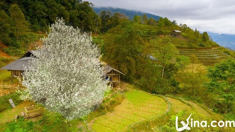 vietnam ha giang in spring - xuan