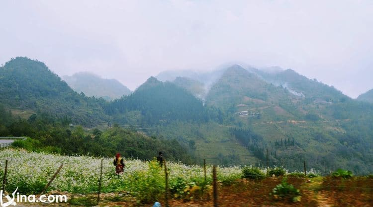 vietnam photos - photos of ha giang landscape by tuyet nguyen