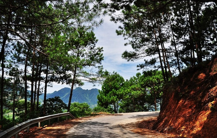 Yen Minh Pine Forest – A Famous Destination In Ha Giang, Vietnam