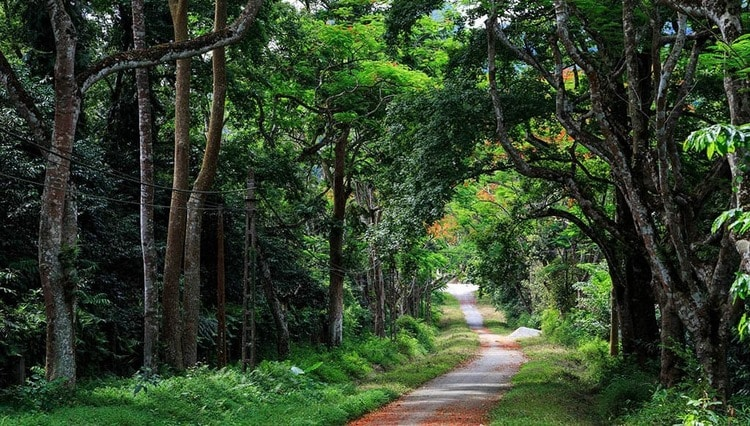 Ba Vi National Park In Hanoi: Best Ecological Zone In Vietnam