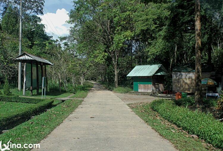 vietnam photos  - nam cat tien national park photos