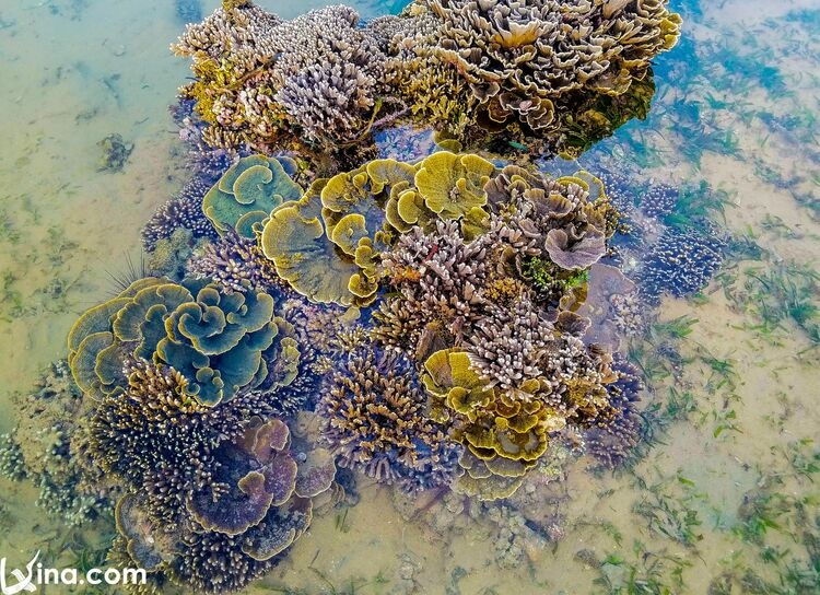 vietnam photos - photos of hon yen coral reefs
