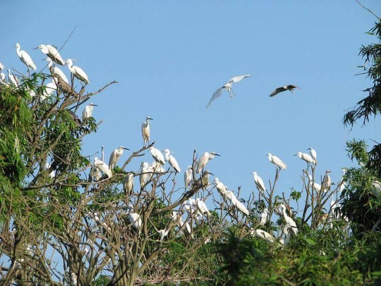 Bang Lang Bird Park – Bird Sanctuary In Can Tho