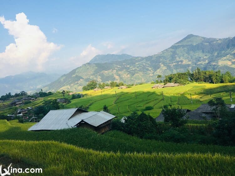 Surprised At The Beauty Of Hoang Su Phi Terraced Fields In Harvest Season