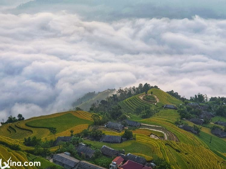 vietnam photos - hoang su phi terraced fields in harvest season 1