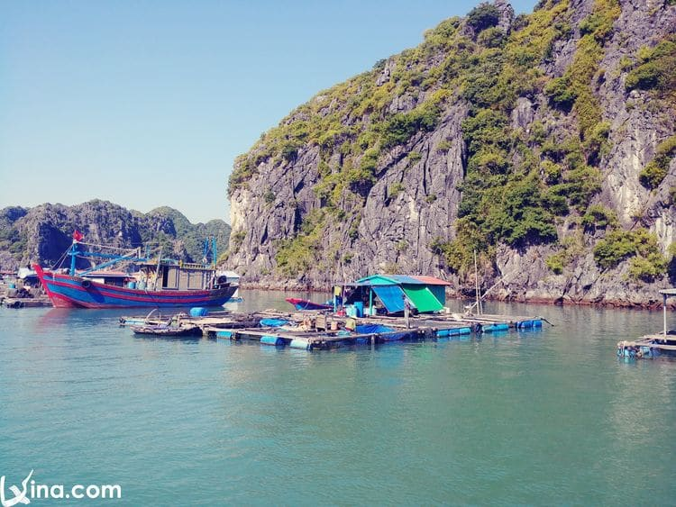 vietnam photos - lan ha bay photos
