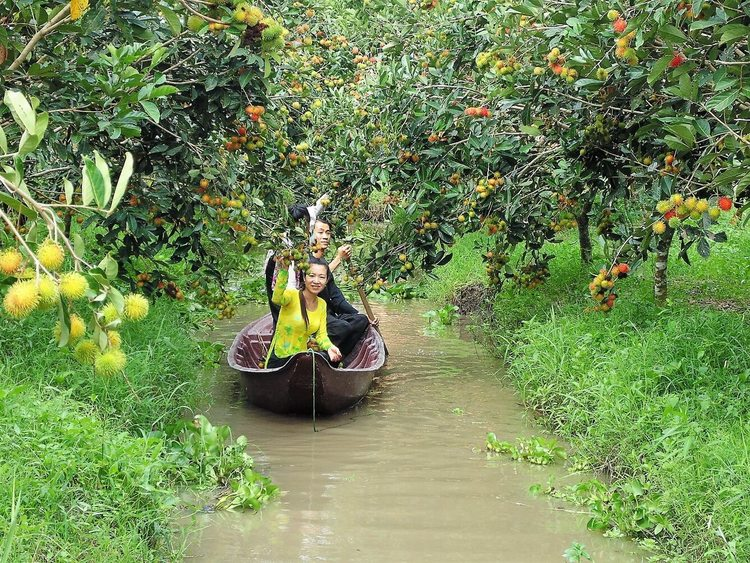 9 Hong Orchard Garden – A Famous Ecotourism Destination In Can Tho, Vietnam