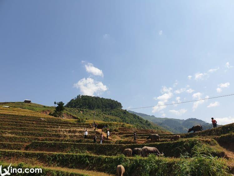 vietnam photos - the endless beauty of mu cang chai photos