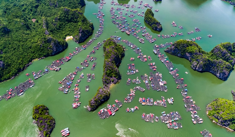 Cai Beo Floating Village: Peaceful Life In Cat Ba Island, Vietnam