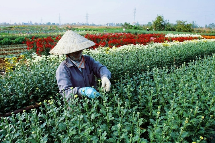 Ha Lung Flower Village: Must-see Attraction In Hai Phong