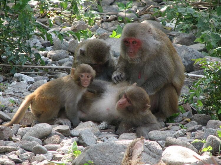 Monkey Island – Beautiful Destination In Cat Ba Island