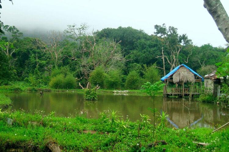 Visit Nhat Lam Thuy Trang Tra In Son Tra Peninsula, Da Nang