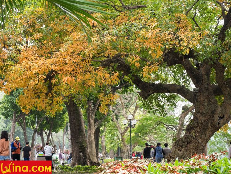vietnam photos - hanoi in changing season photos