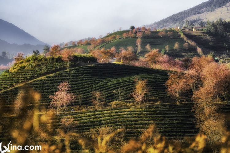 vietnam photos – landscapes of sapa
