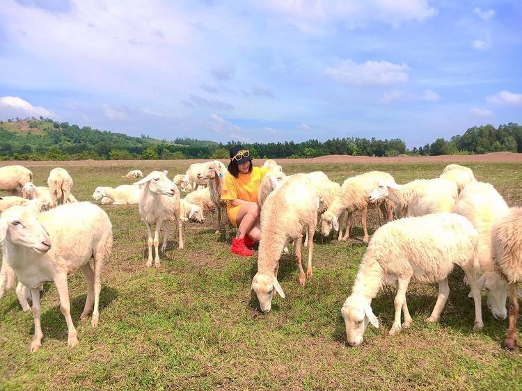 suoi nghe sheep pasture