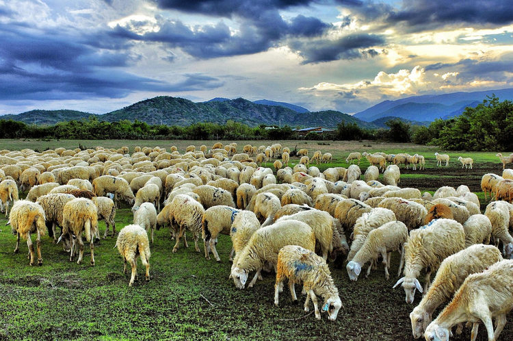 Suoi Nghe Sheep Pasture – The Ideal Place For Experiencing Natural Life